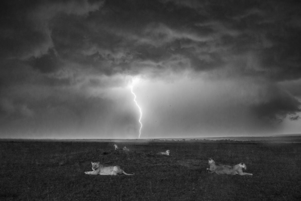 LIONS AND LIGHTNING, Masai Mara, 2018