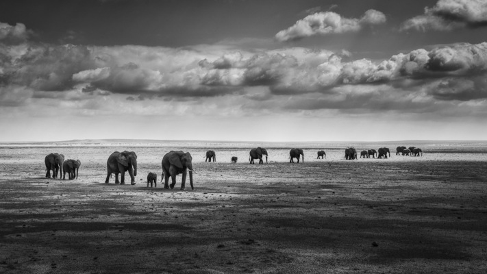 BETWEEN SHADE AND LIGHT, Amboseli, 2012